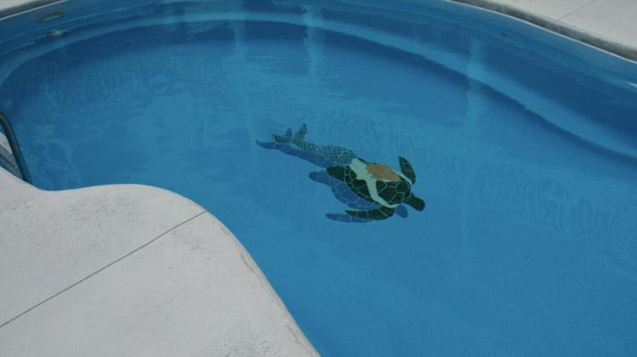 All American Pool Company - Fiberglass swimming pool ...